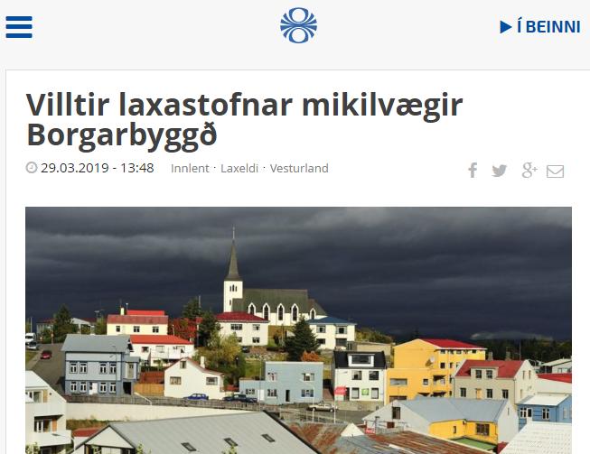 Villtir laxastofnar gríðarlega mikilvægir fyrir afkomu íbúa Borgarbyggðar
