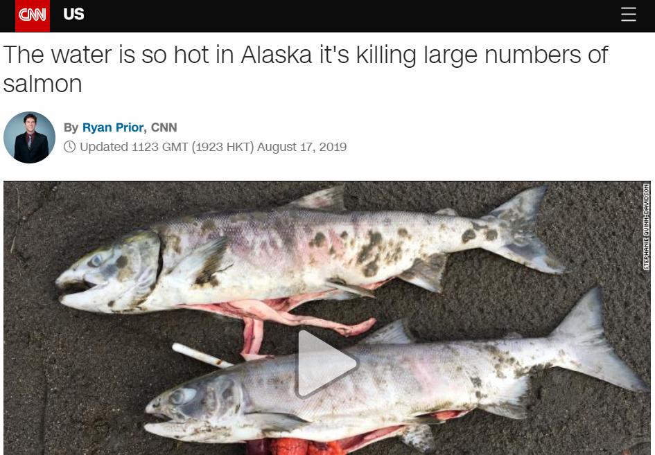 Þúsundir villtra laxa drepast í ám í Alaska vegna óvenjulegrar hitabylgju