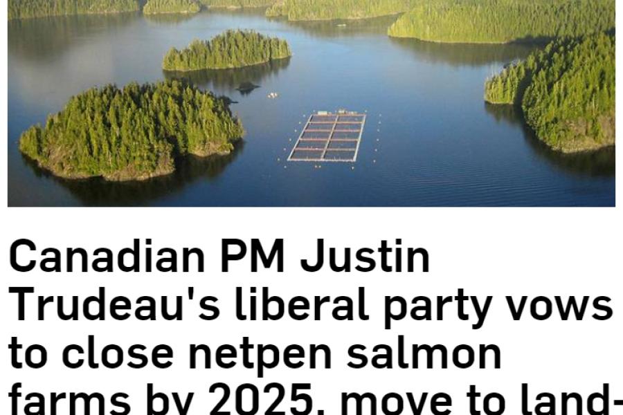 Flokkur Justin Trudeau, forsætisráðherra Kanada, stefnir að loka öllu sjókvíaeldi fyrir árið 2025