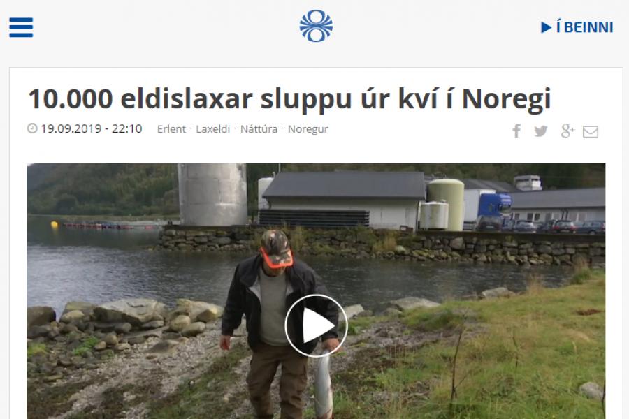 Tíu þúsund eldislaxar sluppu í Noregi: Sleppislys eru óumflýjanlegur fylgifiskur opins sjókvíaeldis