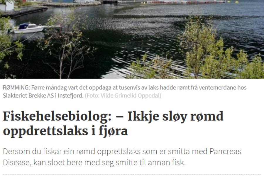 Risasleppislysið í Noregi: Stór hluti fisksins er sýktur smitandi fiskisjúkdóm sem gæti borist í villtan lax